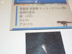 P1030746.JPG